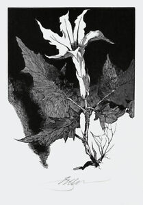Original wood engraving by Barry Moser, Deadly Nightshade, pencil signed
