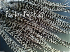 Feather Hair Extensions, Long Beautiful Eurohackle Grizzly Wide Feathers Whiting