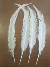 "Lot of 4 Silver Pheasant 19 to 22"" Tail Feathers P5"