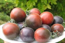 10 graines de tomate rare exotique Wooly Blue Jay heirloom tomato seeds méth.bio