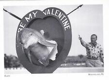 "*Postcard-""Flippy"" -1952-  *Marineland, Florida  (#246)"