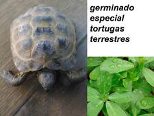 Les choux pour tortues de la terre aliment tortue - 2 grammes