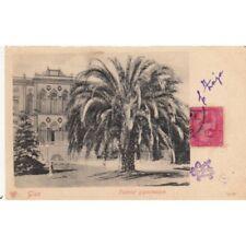 CPA EGYPTE EGYPT GIZE palmier gigantesque timbrée