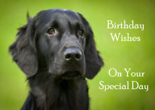 FLAT COATED RETRIEVER BEAUTIFUL HEAD STUDY DOG  BIRTHDAY GREETINGS NOTE CARD