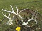 2 XX LARGE  WHITETAIL DEER RACKS  ANTLERS  display wedding shed horn  hunt  28