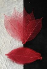25 Skeleton Leaves Red see through leaf Wedding Christmas Valentine Cards medium