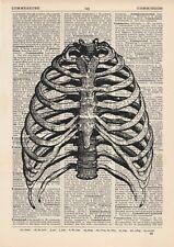 Anatomical Ribcage Dictionary Art Print,Medical Anatomy Vintage Rib Cage Medical