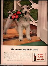 1943 Wire Fox Terrier Four Roses in Mouth Vintage Print Distillery Whiskey Ad