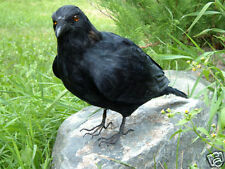REALISTIC RAVEN REPLICA HALLOWEEN BIRD PROP FURRY ANIMAL CK162 FREE SHIPPING USA