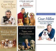 Cesar Millan Bücherserie Hundeflüsterer Hundeerziehung Hundetraining Hundepflege