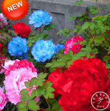 25 Color Chinese Peony Flowers Plants Potted Flowers Bonsai Garden 10 Pcs Seeds