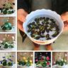 10Pcs Lotus Flower Seeds Rare 6 Kind Water Plant Bonsai Hydroponic Garden Hot