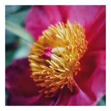 """Unique handmade """"Peony"""" card with a professionally printed photograph"""