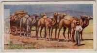 South Australian Great Desert Camel Team and Wagon 1920s Trade Ad Card