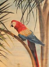 Vintage gouache painting parrot portrait