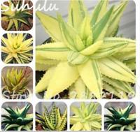 MIX Aloe 100 seeds succulent plants bonsai seeds rare Herbs aloe vera