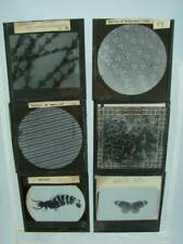 6 X MAGIC LANTERN SLIDE / SLIDES, MICROSCOPE VIEWS / SCIENCE / BOTANY / INSECT