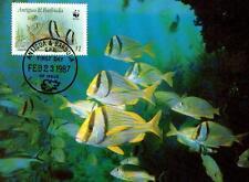 (70501) Antigua Barbuda Maxicard Porkfish 1987