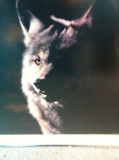 """Wolf, Ltd Ed 167/950  Carl R. Sams,II 21""""x30"""", Framed"""