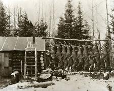 Vintage Deer Hunt Log Cabin Huge Buck Pole Classic Whitetail Deer Hunting Image