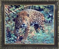 Jaguar (Panthera, Leopard) Prowling Cat Wildlife Animal Wall Art Framed Picture