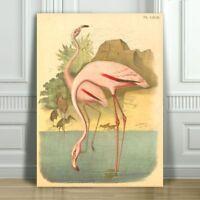 "Beautiful Vintage FLAMINGO Illustration #2 - CANVAS ART PRINT POSTER - 18x12"""