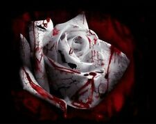 50 pcs Rarest White Blood Rose Plant Flower Seeds