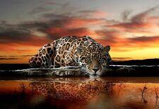 Jaguar wild cat wallpaper for bedroom & livingroom 254x184cm photo wall murals