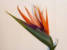 Strelitzie/Strelizie Paradiesvogelblume  Kunstblumen -Seidenblumen