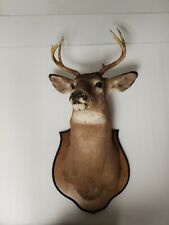 6 Point Whitetail Deer Head Shoulder Mount Taxidermy Mounted Shed Antler Rack