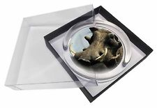 Wart Hog-African Pig Glass Paperweight in Gift Box Christmas Present, AP-3PW