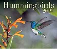 Hummingbirds 2019