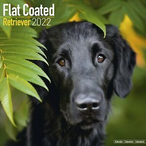 Flat Coat Retriever Dog - 2022 Square Wall Calendar