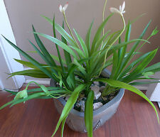3 Artificial Blooming Flower Orchid Grass Plastic Plants Home Garden Decoration