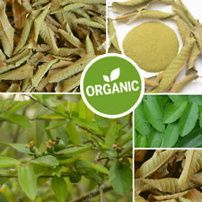 Goyave déshydrater les feuilles organiques en poudre thé à base de plantes...
