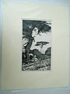 """ANTIQUE ART ERNEST HASKELL """"Cypress Vale""""  ETCHING 1915 16x20 Signed/Matted z14"""