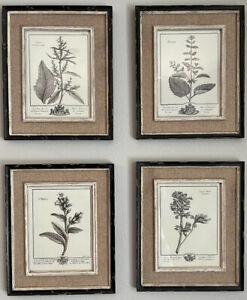 Botanical Casual Grey Study Framed Wall Art Decor Flower Print Cottage Farmhouse