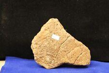 Genuine Plesioaur Dinosaur Bone