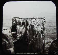 Glass Magic Lantern Slide PINACLE ROCK FARNE  C1890 SCOTLAND