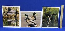 Wildlife Photographs 8 X 10 Photos Pictures Bald Eagle Loon & Mallard Duck Set 3