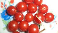 Mexikanische Wild Tomate Ampel Tomaten Samen neue Ernte 2020  bio Anbau Nr.82