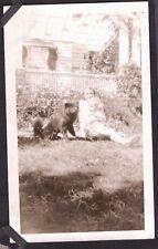 VINTAGE PHOTOGRAPH 1935 GIRL BLACK-ALASKAN MALAMUTE DOG HARNESS CANADA OLD PHOTO