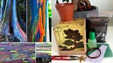 Eucalyptus deglupta Bonsai Kit-Suelo/Macetas/Semillas 2x/alambre/fertilzer/malla/Pinzas