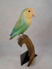 Peach-faced Lovebird Original Bird Wood Carving