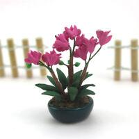 1/12 Scale Dollhouse Miniature Clay Pink Phalaenopsis Flower Plant Garden