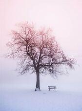 PHOTO LANDSCAPE WINTER SNOW FOGGY SUNRISE TREE BENCH ART PRINT POSTER MP3948A