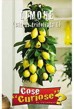 Semi/Seeds LIMONE - Citrus Limon