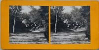 Foresta Da Fontainebleau Francia Foto Stereo PL47 Vintage Analogica c1900