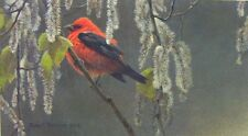 Robert Bateman  -  Scarlet Tanager And Alder Blossoms  76 A/P Paper Print