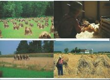 INDIANA Postcard LOT Wheat Harvest AMISH COUNTRY Draft Horses Baby Chicks Penrod
